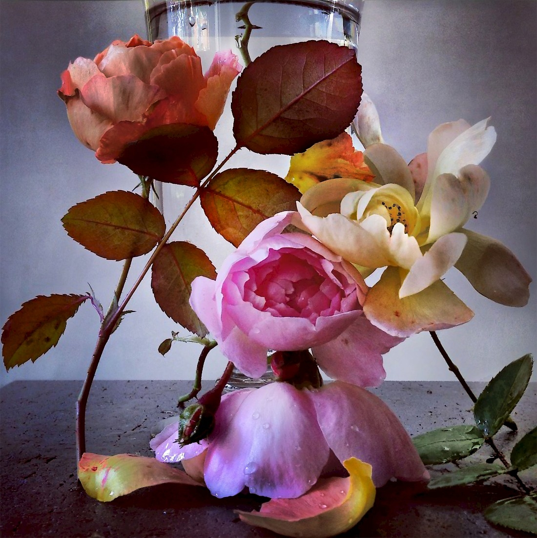 Roses, Nick Knight0x0